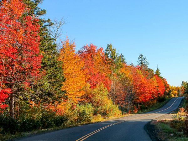 Roadside trees hwy 10. Photo by Jodi DeLong
